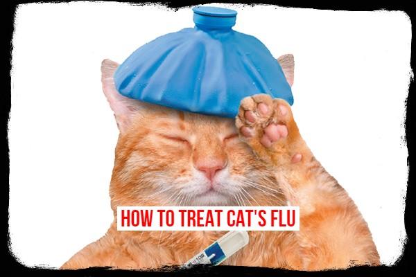 treat cat flu