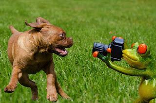 Anjing Takut DI Foto