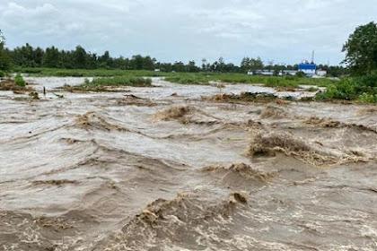 Mata Lele Penyebab Banjir Pekalongan Berwarna Hijau