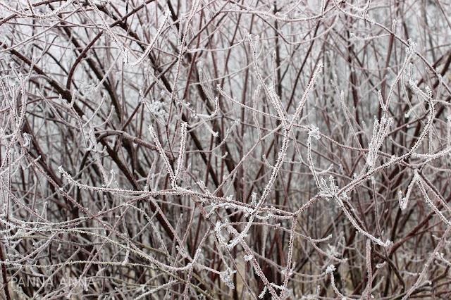 krzaki zimą