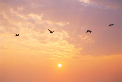 Pássaro voando no céu