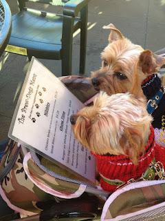 cães em restaurante petfriendly