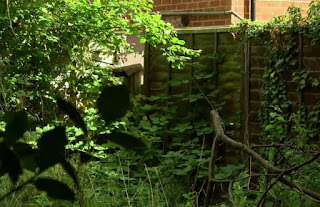Kath's overgrown garden and falling down fence