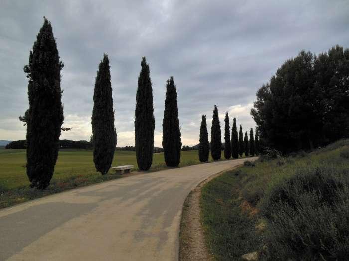 Logrono, Camino, Jola Stępień
