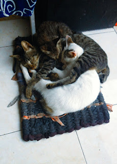 Cats Brother Hood Sleep Together On The Doormat