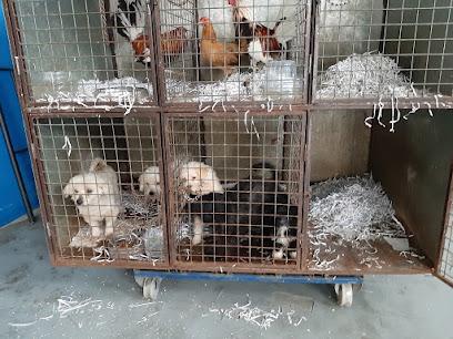 ENTRADA DE 5 PERROS - NEUZUGANG VON 5 HUNDEN  - NEW ENTRANCE OF 5 DOGS