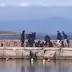 ΕΚΤΑΚΤΟ-Επίθεση σε μέλη ΜΚΟ στο λιμάνι της Θέρμης στη Λέσβο(βίντεο).