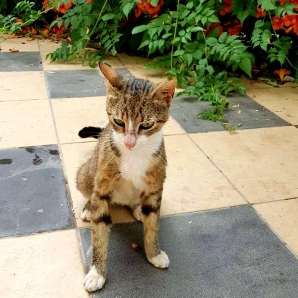 montenegro stray cats