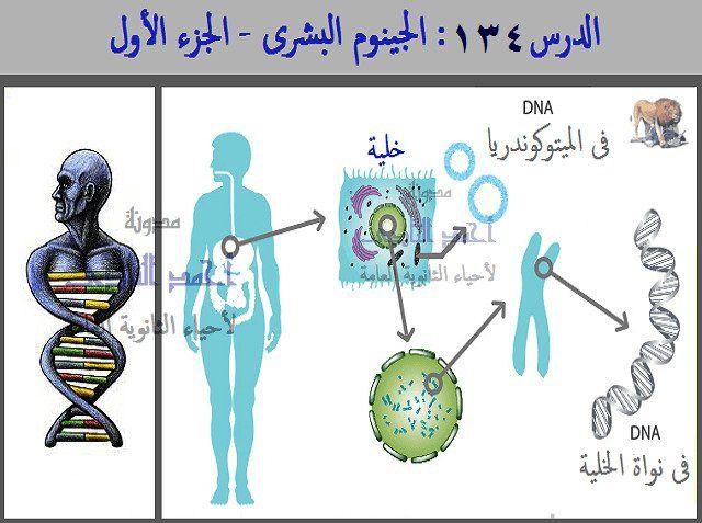 الجينوم البشرى GENOME   -  الحمض النووى DNA   أحياء الثانوية العامة – مدونة أحمد النادى