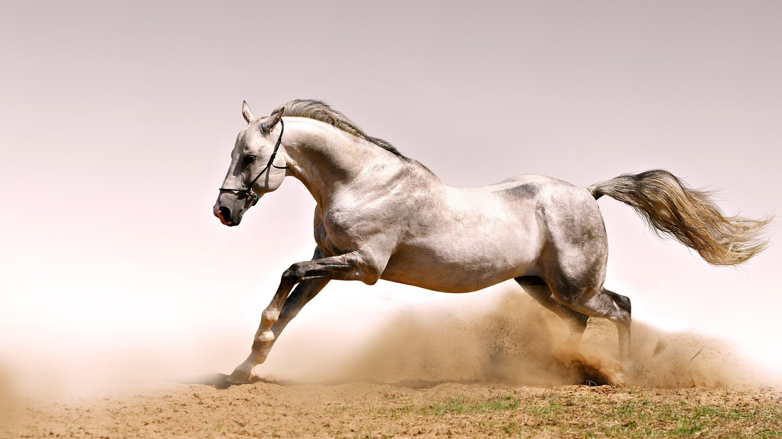 Fantastic   Wallpaper Horse Ultra Hd - Wild-White-Horse-HD-Wallpaper  Trends_6610082.jpg