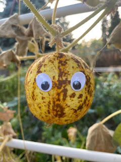 Lemon Cucumber with Eyes