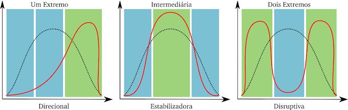 Evolução | Seleção Natural e Especiação