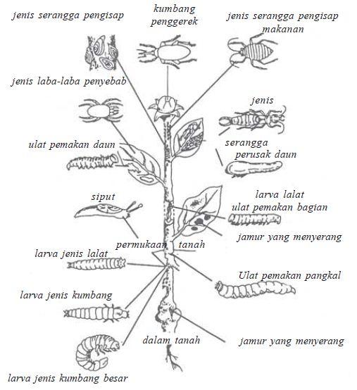 Macam-macam Jenis hama dan penyakit pada tumbuhan