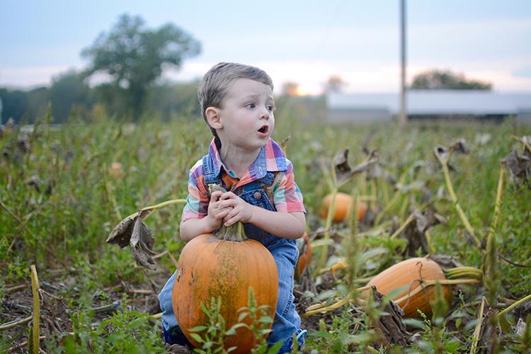 Pumpkin Patch   My Darling Days