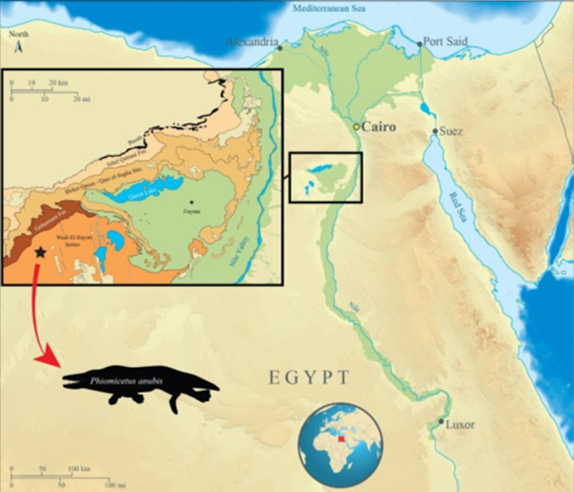 Η περιοχή στην οποία ανακαλύφθηκε το απολίθωμα (Gohar A.A. et al.)