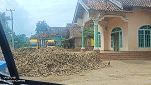 Sudah beroperasi lama, Lapak Singkong di Desa Karya Sakti Diduga tidak memiliki Ijin