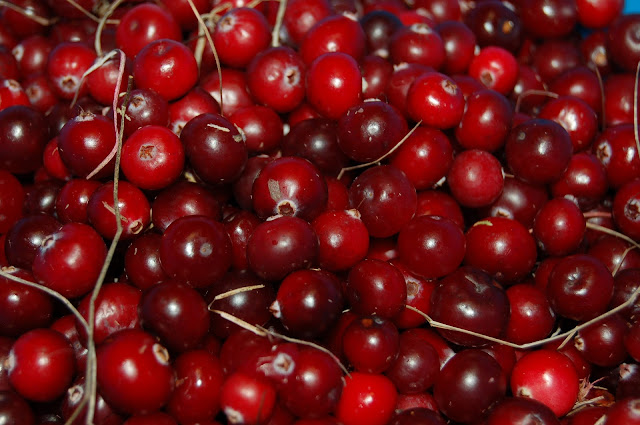 Cranberries : Health benefits, Nutritional facts and how to buy, store, clean and use it