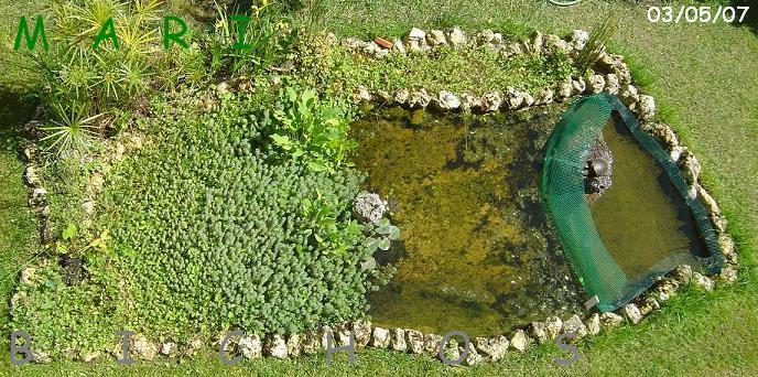 Un zoo en casa estanques con filtraci n natural para tortugas for Estanque prefabricado tortugas