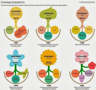Teeltcombinaties Combinatieteelt moestuin volkstuin