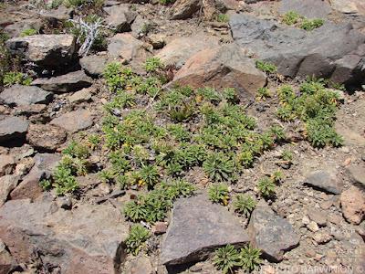 flora de los bosques patagonicos
