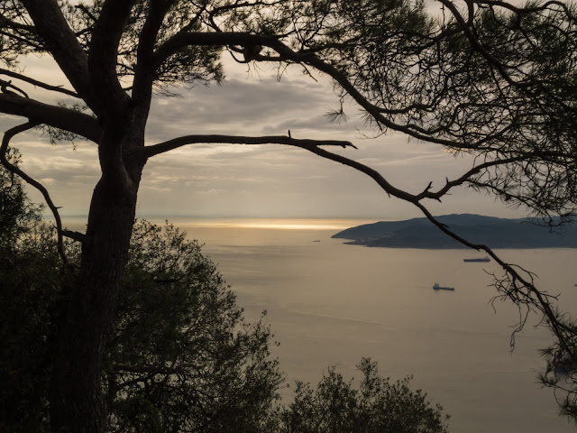 Landscape of the Bay of Gibraltar with a tree in the foreground.