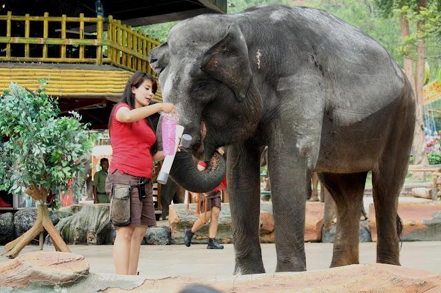 Melawat Haiwan Di Zoo Seluruh Dunia
