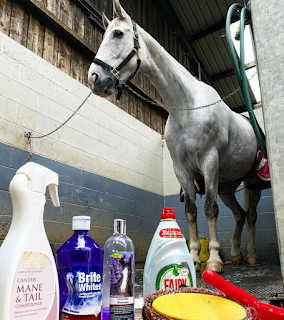 Clipping & Bath Time - Team Tunnah Equestrian Blog