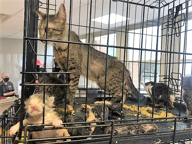 Building contractor spent 8 hours rescuing 15 cats stuck in walls of abandoned home