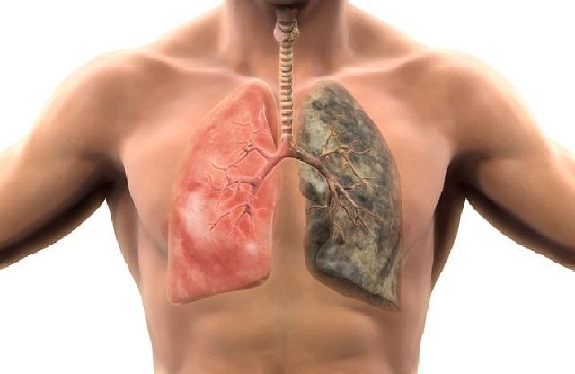 Akciğer için faydalı besinler görsel