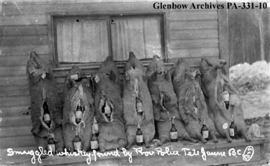 Botellas ocultas dentro de cerdos