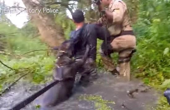 King Of Dog Swamp Facebook Video