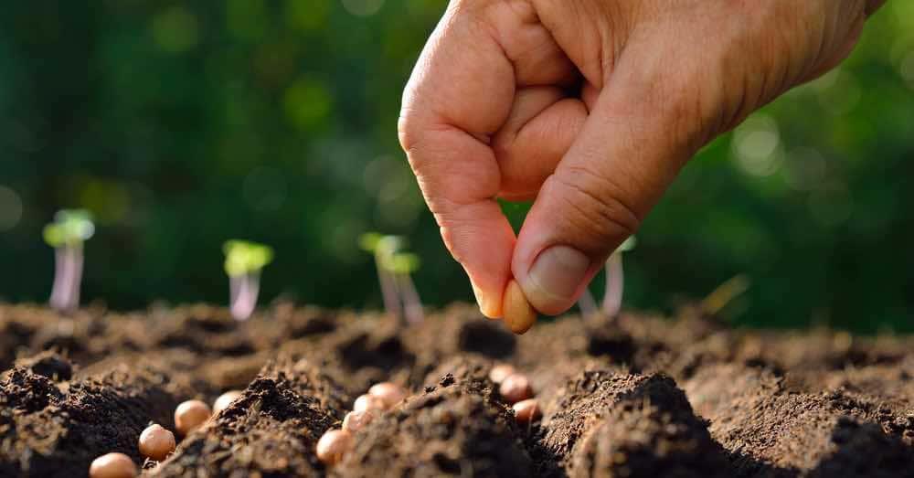 semillas hortalizas