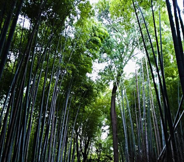 visita-arashiyama-kyoto