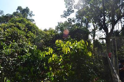 Vegetasi Hutan hujan yang luas
