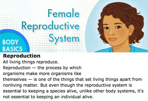 Female reproductive system basics in Kidshealth