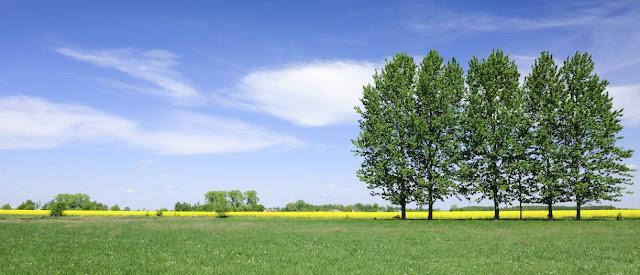 Reino vegetal y biologia