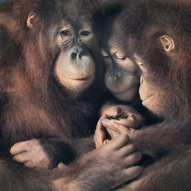 Green Pear Diaries, fotografía, Tim Flach, More than Humans, animales