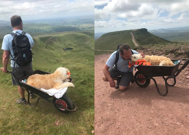 Хозяин устроил прощальное приключение своему псу, который умирал от лейкемии, но успел увидеть горы