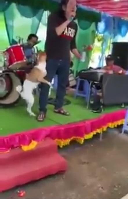 Giọng hát làm cho chó phải động tình :v