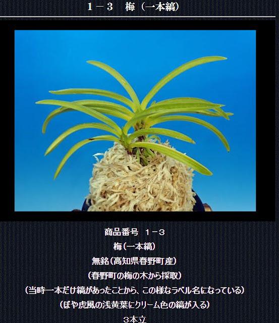 http://www.fuuran.jp/1-3html