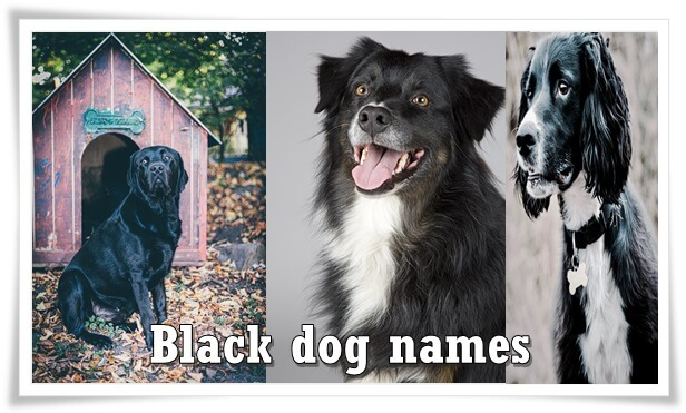Black dog names
