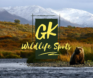 GK Wild life