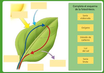 http://www.bromera.com/tl_files/activitatsdigitals/Natura_5c_PA/natura5_cas_u04_pag46.swf