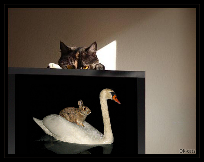 Photoshopped Cat picture • Weird cat spying its human watching a crazy bunny riding a swan on TV