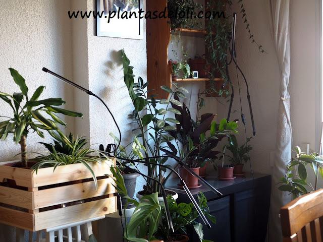 Luces De Crecimiento Para Plantas