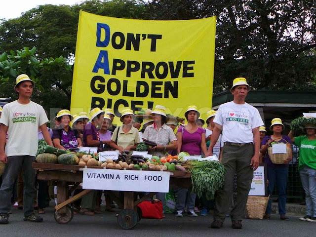 ONGS ambientalistas promovem campanhas contra o arroz dourado no mundo. 113 Premios Nobel pedem fim dessa campanha que promove 'c rime contra a humanidade'