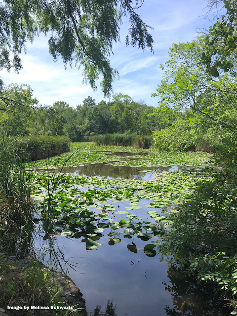 Blissful peek through the wisps of trees into a idyllic wetland at Walking Stick Woods in Chicago
