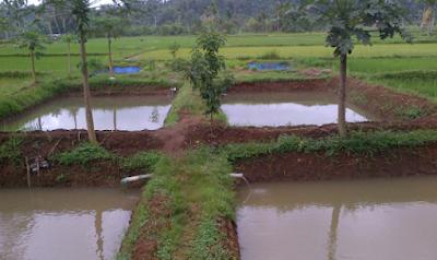 cara pembuatan kolam ikan nila