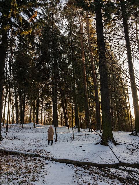 Шуваловский парк Парголово декабрь солнце снег лес сосны Игорь Новик фото