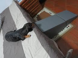 escadas e rampas para cães de grande porte